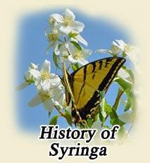 historyofsyringa